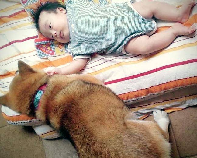 初めて見る赤ん坊にちゃんと添い寝できた柴男社長