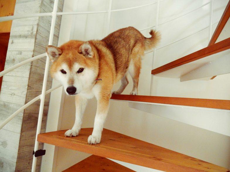 今日も階段で筋トレします