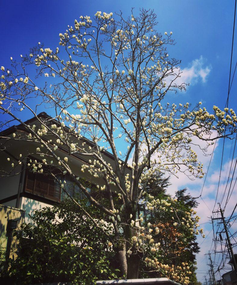 近所にちょっとだけ春