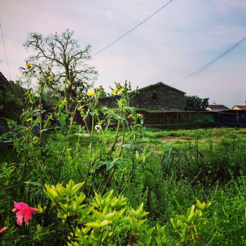 朝の散歩、近所の牛舎