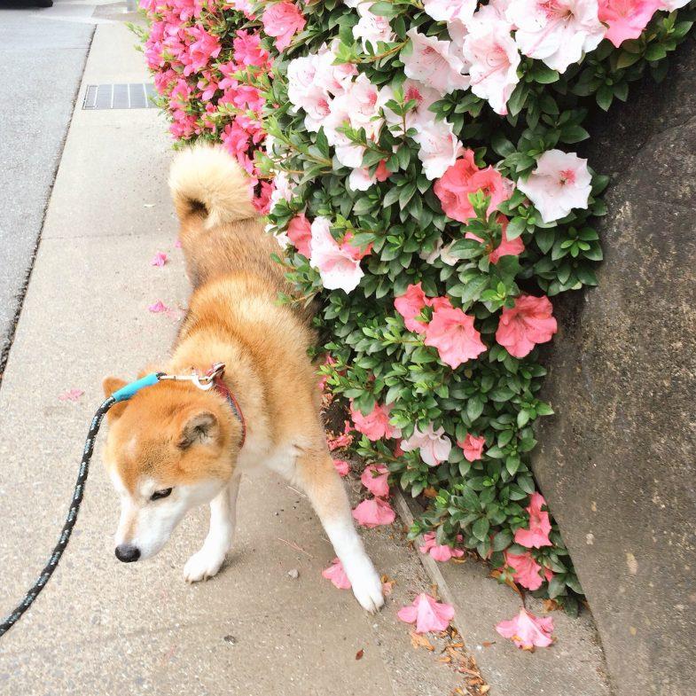 きれいな花にもチェックイン